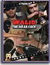 Walid The Arab Cock