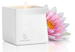Afterglow Pink Lotus Massage Oil Candle
